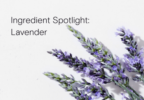 Lavender: So much more than a beautiful scent